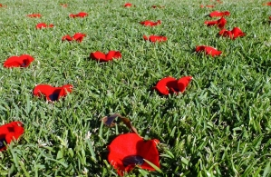 anzac day 2012 07