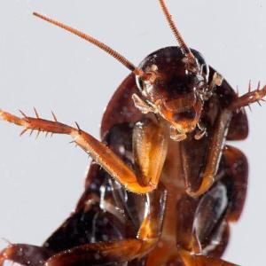 cockroach_1